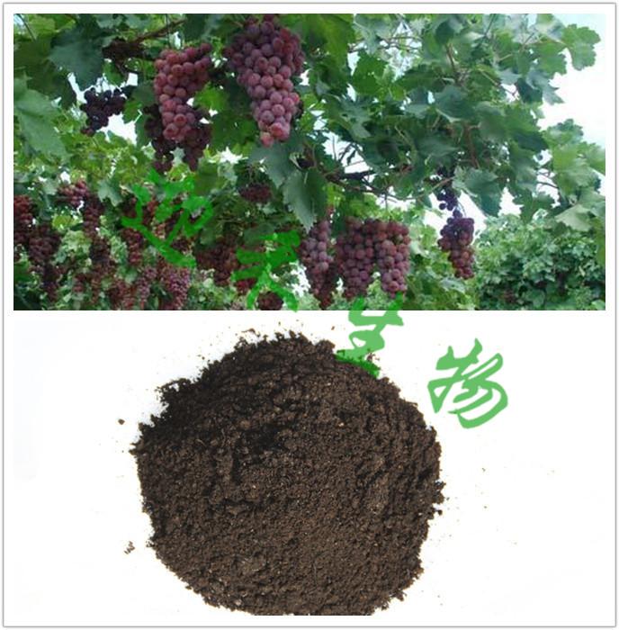 施用有机肥料促进葡萄园土壤改良