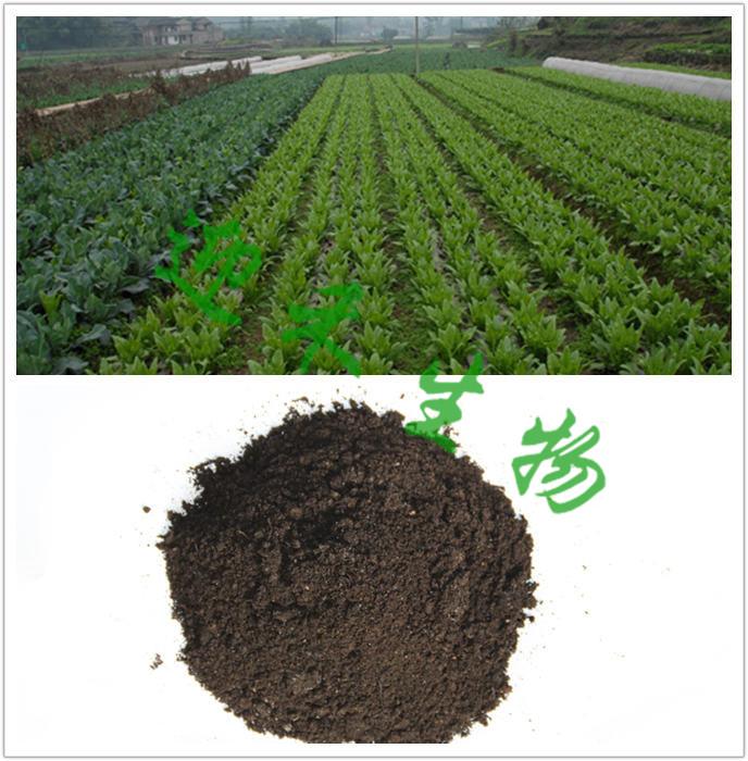 大棚蔬菜怎么施肥才能高产呢?