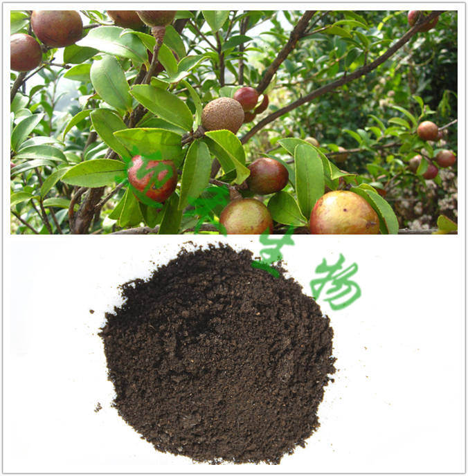 油茶种植一定要施用有机肥料
