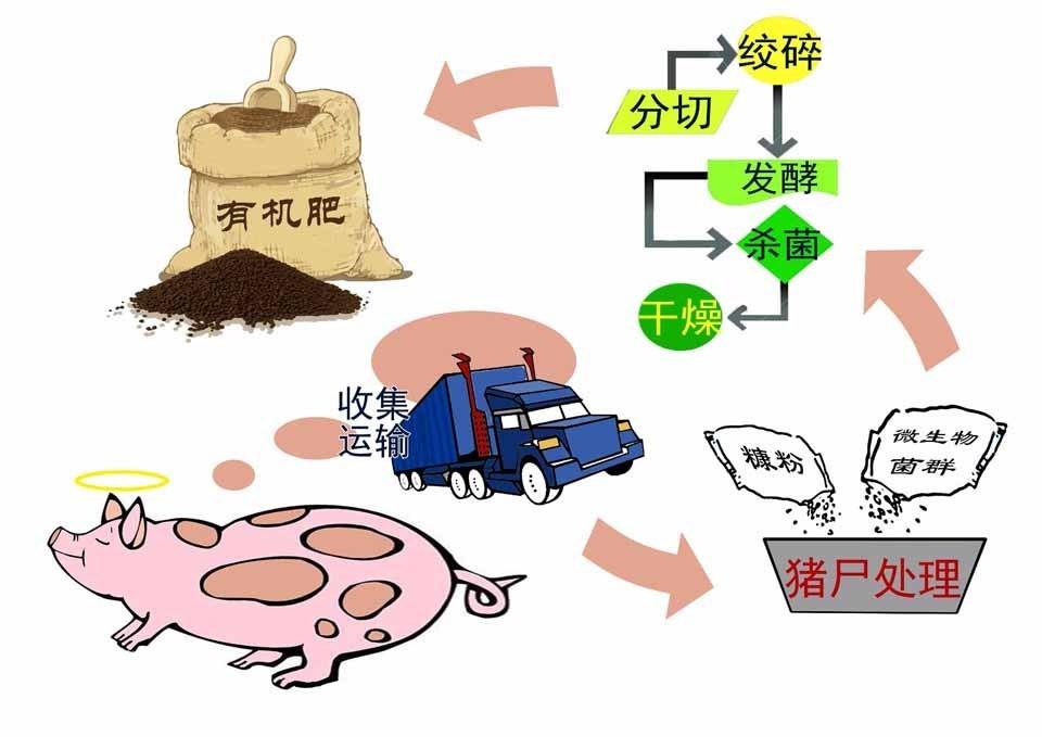 有机肥施的好 枇杷产量一年更比一年高!!!
